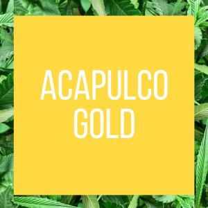 tt-strainpage-acapulcogold-1-27-2017