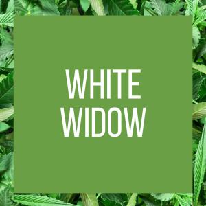 tt-strainpage-indica-whitewidow-2-10-2017