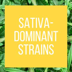 tt-strainpage-sativadominant-1-26-2017