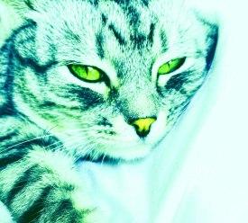 CheshireKid.jpg