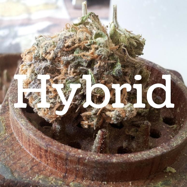 TT.Hybrid