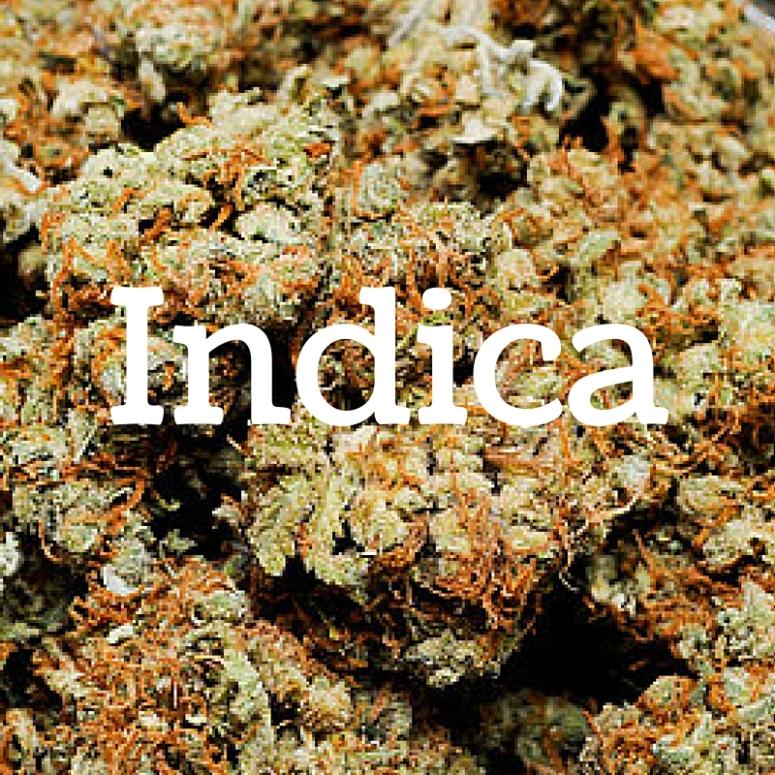 TT.Indica