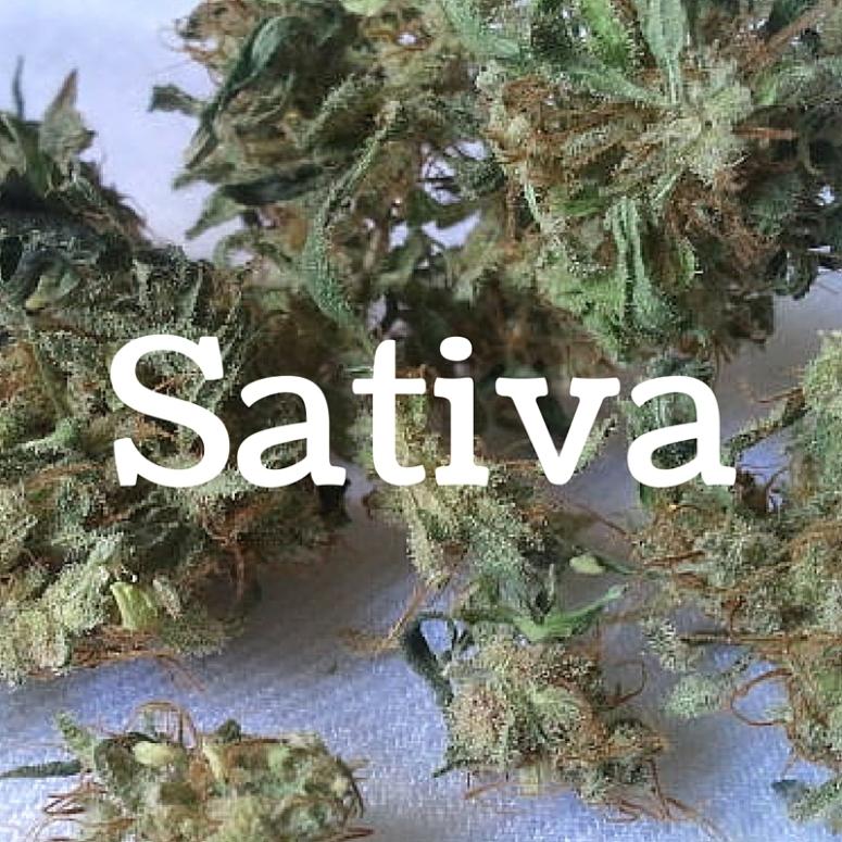 TT.Sativa