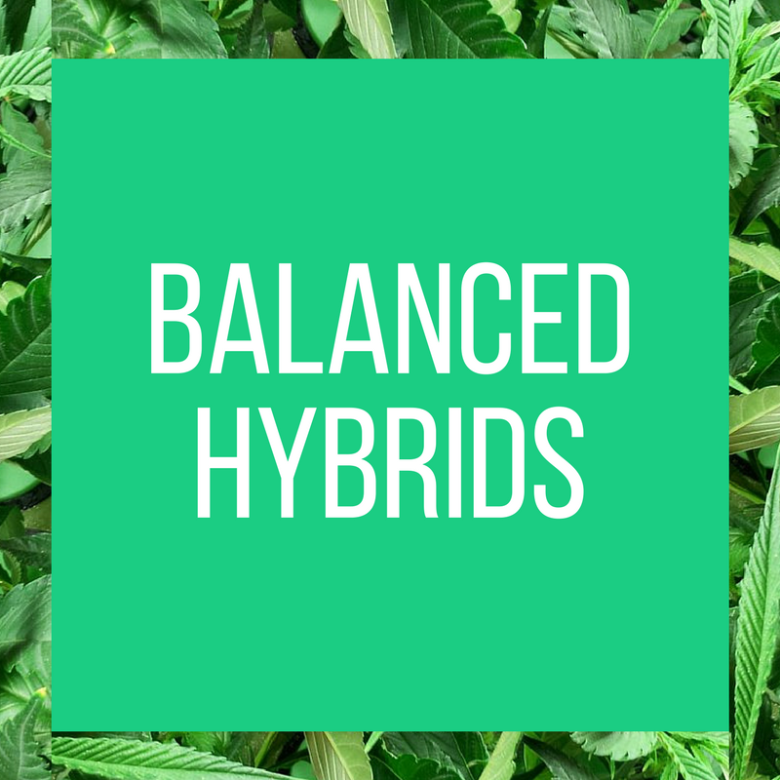 TT.StrainPage.BalancedHybrids.5.13.2017