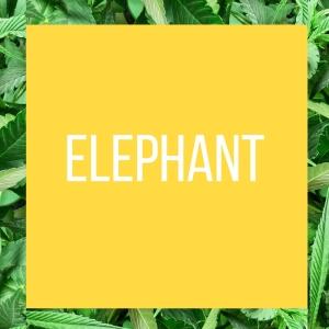 TT.StrainPage.Elephant.7.7.2018
